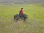 The Icelandic horseservie - Tvistur Horsrental